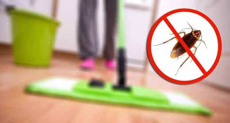 How To Get Rid Of Fleas In Home